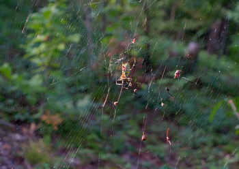 1クモ の巣.jpg