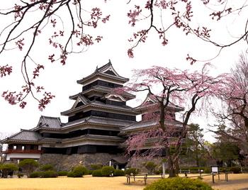 3松本城1 のコピー.jpg