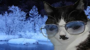 ネコ修正 のコピーb のコピー.jpg