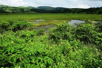 八島湿原10a .jpg