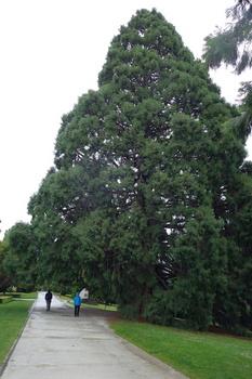 巨木2 のコピー.jpg