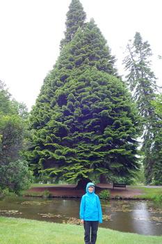巨木1 のコピー.jpg