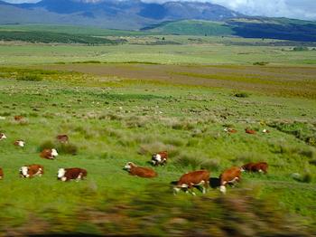 放牧地 のコピー.jpg