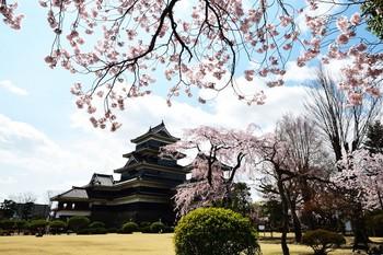 松本城桜Apr2_00001DSC_7435 のコピー.jpg