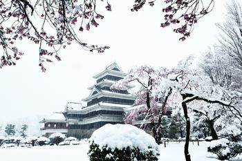 松本城桜修正_00001松本城桜_00100DSC_7403 のコピー 2.jpg