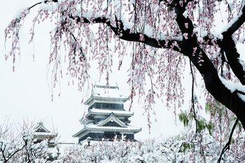 松本城桜_00020DSC_0506 のコピー 2.jpg